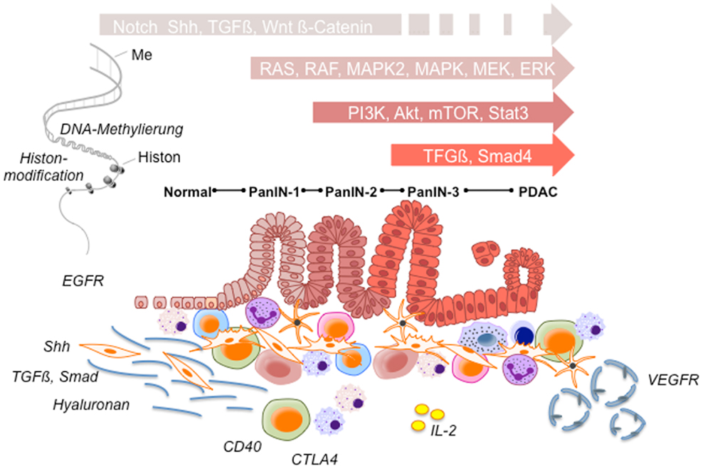 pancreatic cancer review human papilloma virus lythat