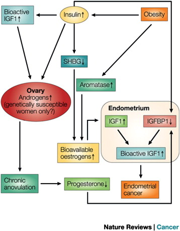 endometrial cancer and obesity human papillomavirus vaccine safety