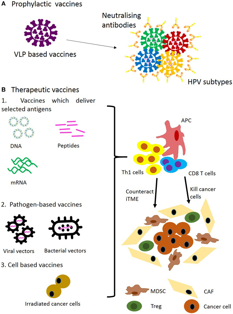 immunotherapy hpv head and neck cancer