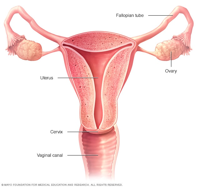 cervical cancer meaning papilloma jelentese