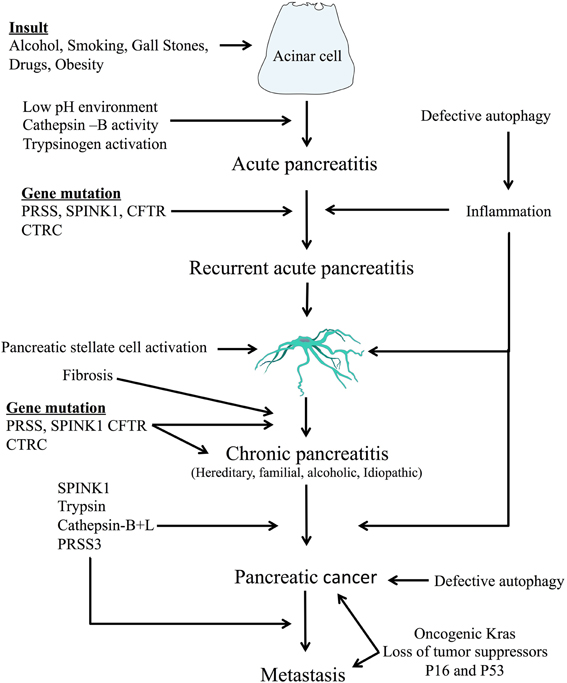 cancer pancreatic enzymes
