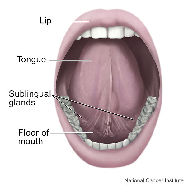 hpv affect mouth
