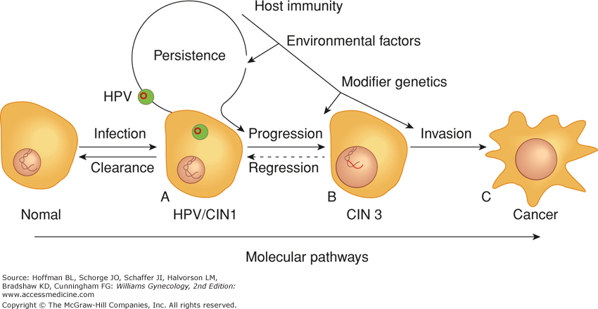 hpv and cervical cancer pathogenesis ovarian cancer treatments