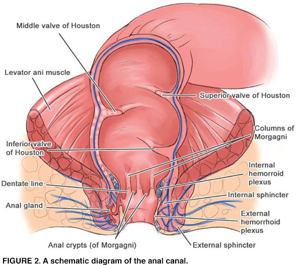 hpv anorectal hpv virus test manner