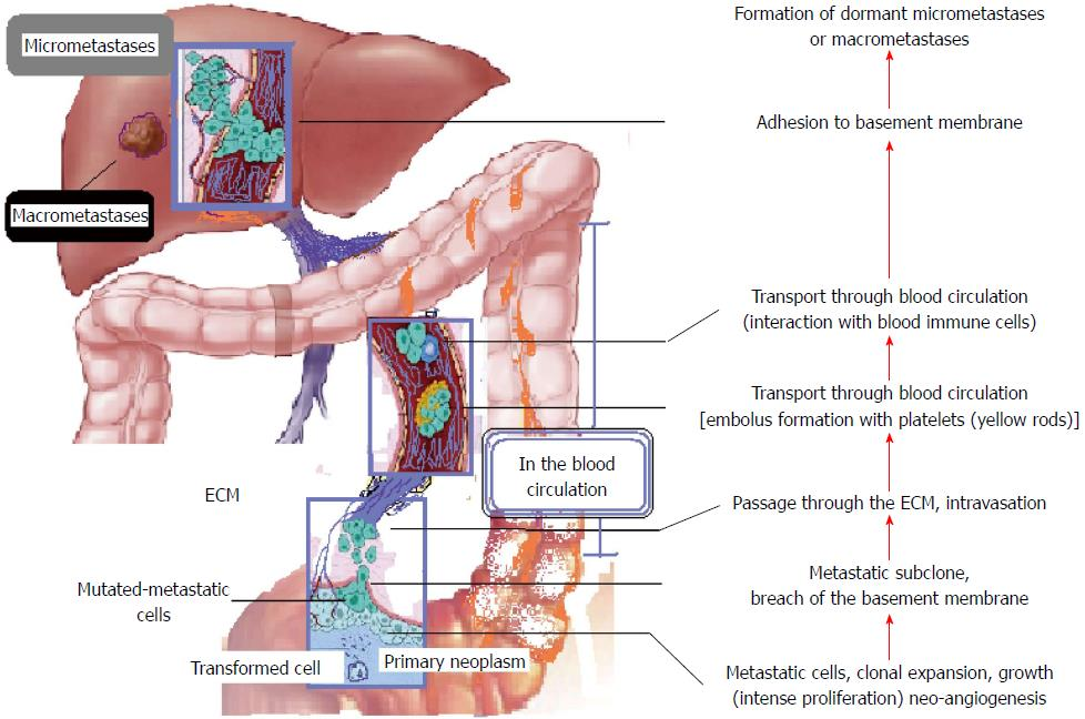 rectal cancer with liver metastasis wart treatment malaysia