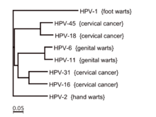 what is hpv virus cancer