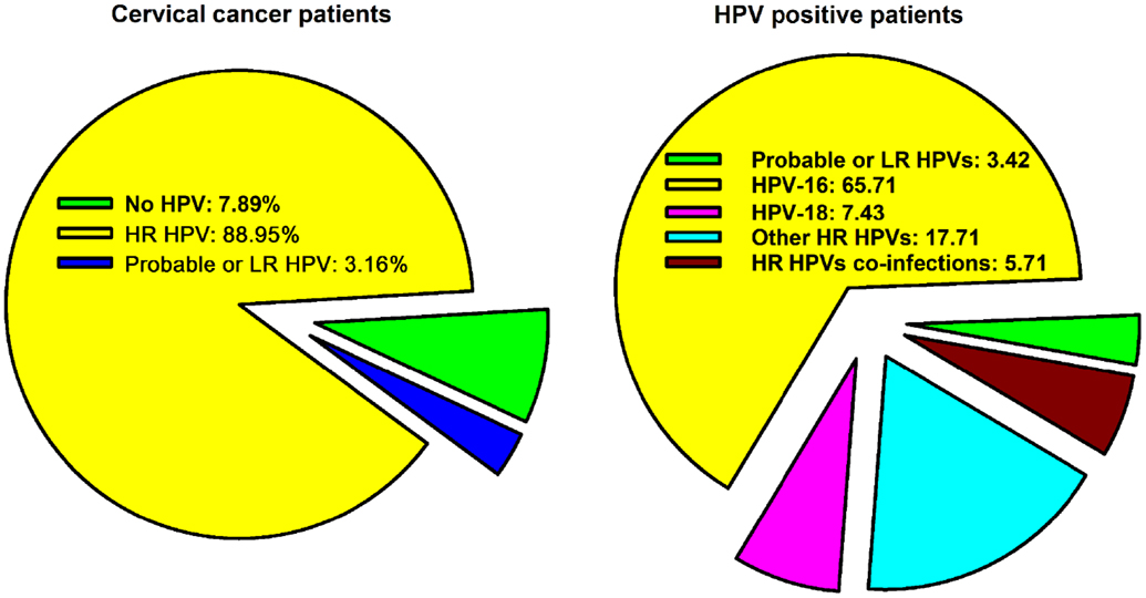 hpv 16 and 18 and cervical cancer hpv from herpes virus