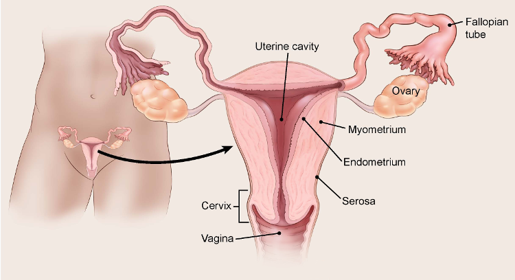 endometrial cancer questions to ask your doctor